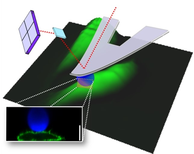 Advances in Bioimaging - Journal of Physics D: Applied