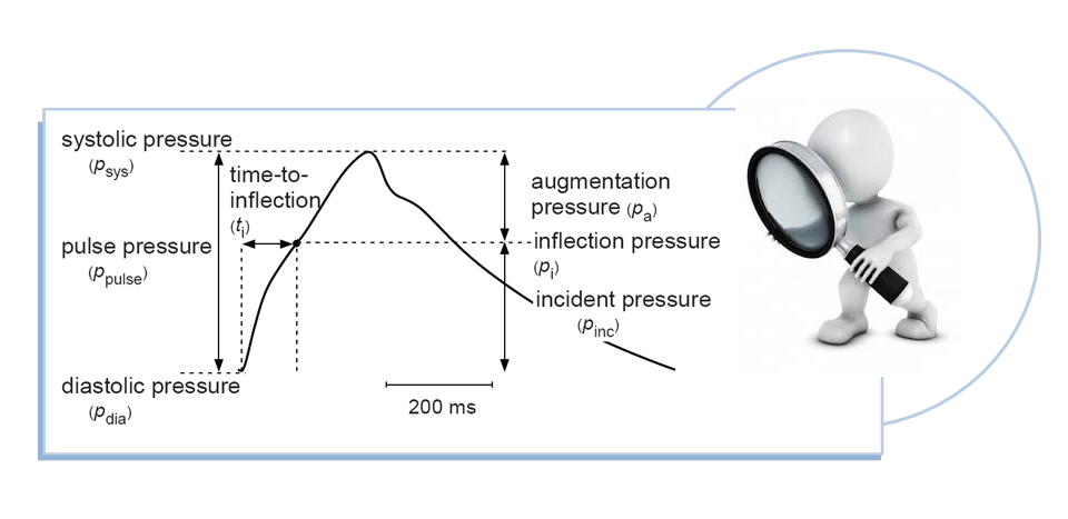 Focus on analysis and measurement of the arterial pulse